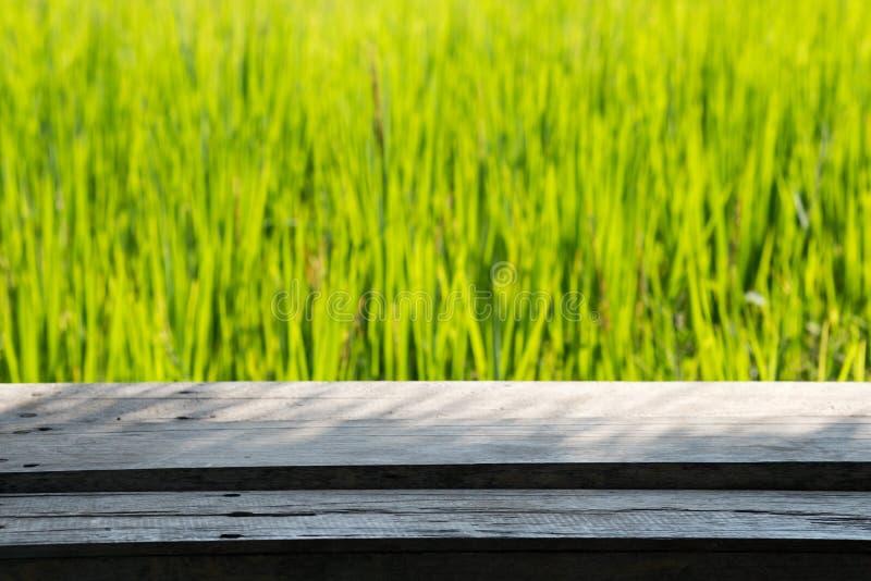 Feche acima do arroz no campo imagens de stock