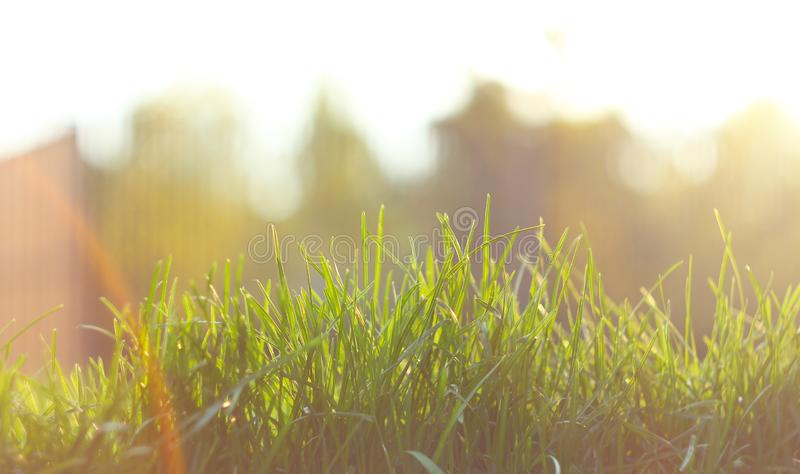 Feche acima do campo de grama verde com fundo do parque do borr?o, mola e conceito do ver?o, filtro do vintage Natureza bonita Co fotografia de stock royalty free