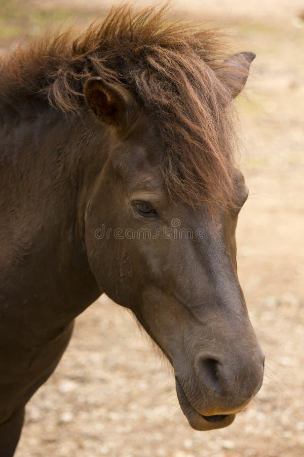 Feche acima do cavalo fotografia de stock royalty free