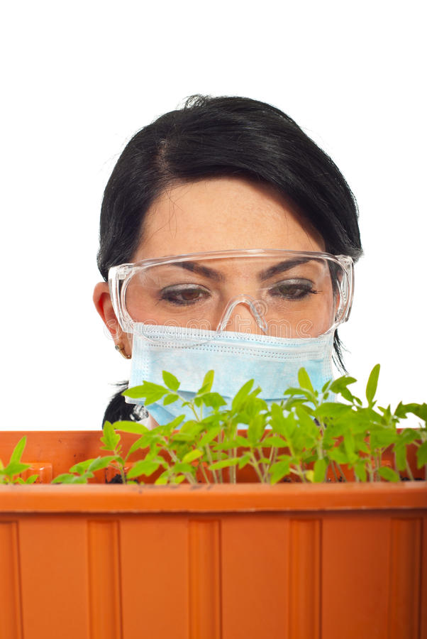 Feche acima do cientista examinam a folha nova das plantas fotos de stock royalty free