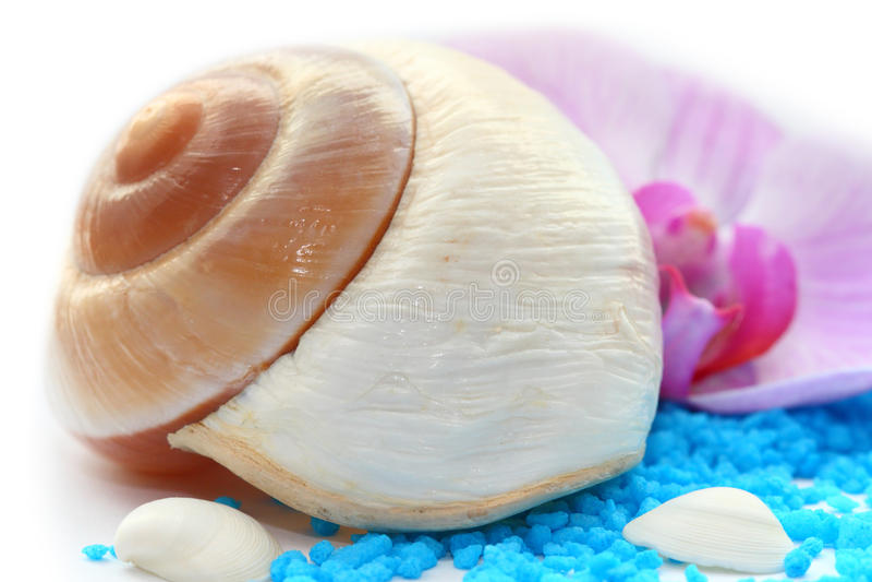 Download Conch branco imagem de stock. Imagem de mollusk, ornament - 29827483