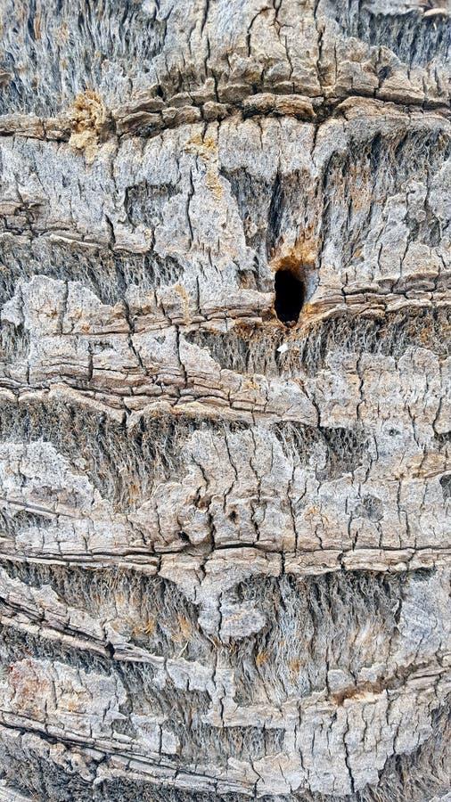 Feche acima do detalhe de casca de árvore imagem de stock royalty free