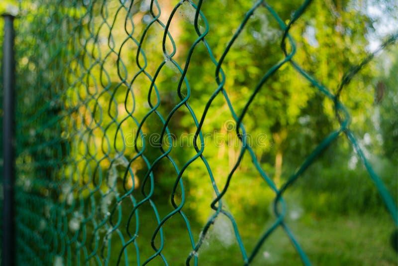 Feche acima do elo de corrente do metal no jardim Cerca de fio da malha do diamante no fundo verde borrado Raspagem do ferro líqu foto de stock