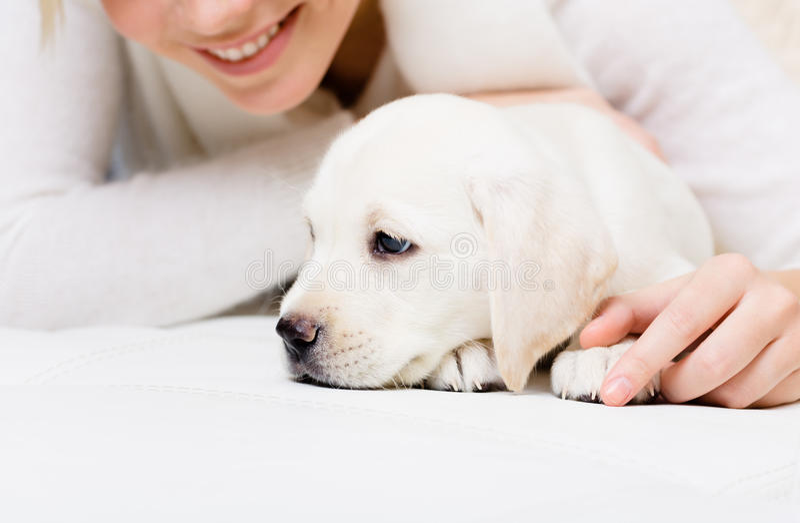 Feche acima do filhote de cachorro de Labrador que encontra-se no sofá com mulher foto de stock royalty free