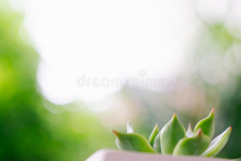 Feche acima do foco seletivo da planta carnuda bonita com bokeh verde fotos de stock