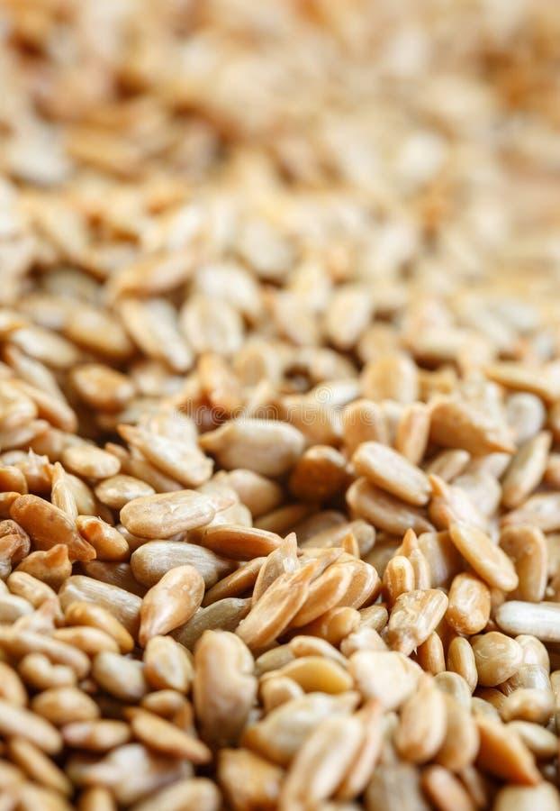Feche acima - do fundo das sementes de girassol com foco seletivo fotos de stock royalty free