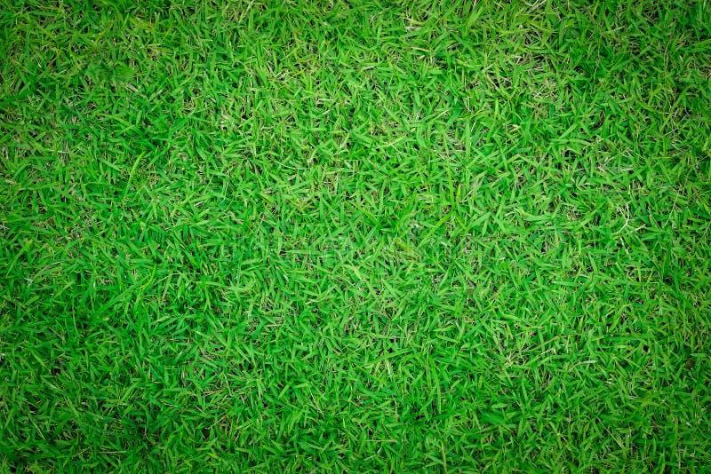 Feche acima do fundo do teste padrão bonito da grama verde fotografia de stock