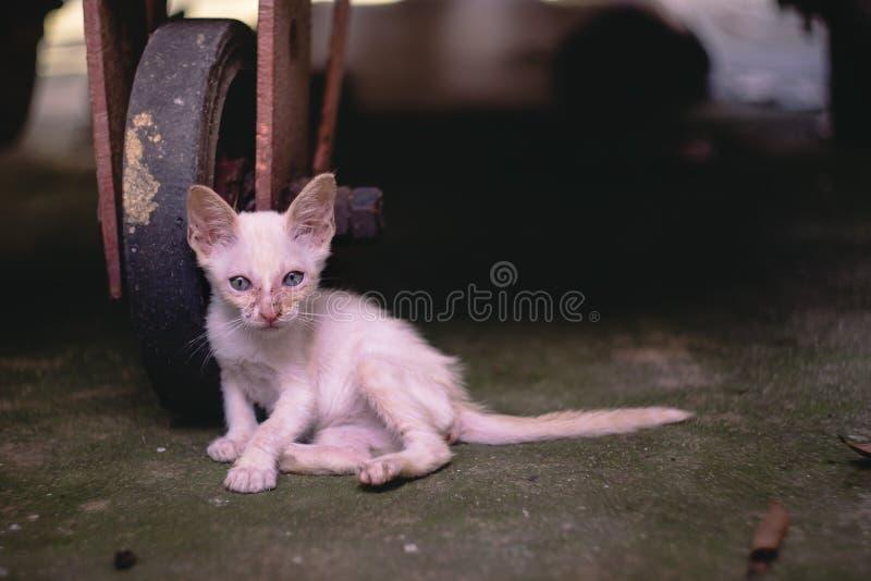 Feche acima do gatinho disperso pobre magro pequeno, sentando-se debaixo de um t imagens de stock
