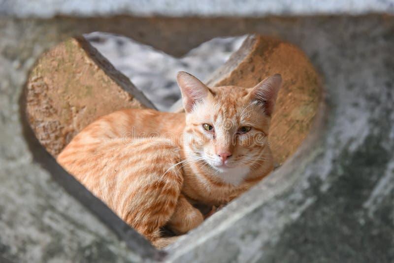 Feche acima do gato marrom novo impertinente está sentando-se no assoalho e está olhando-se o coração da janela do cimento fotografia de stock