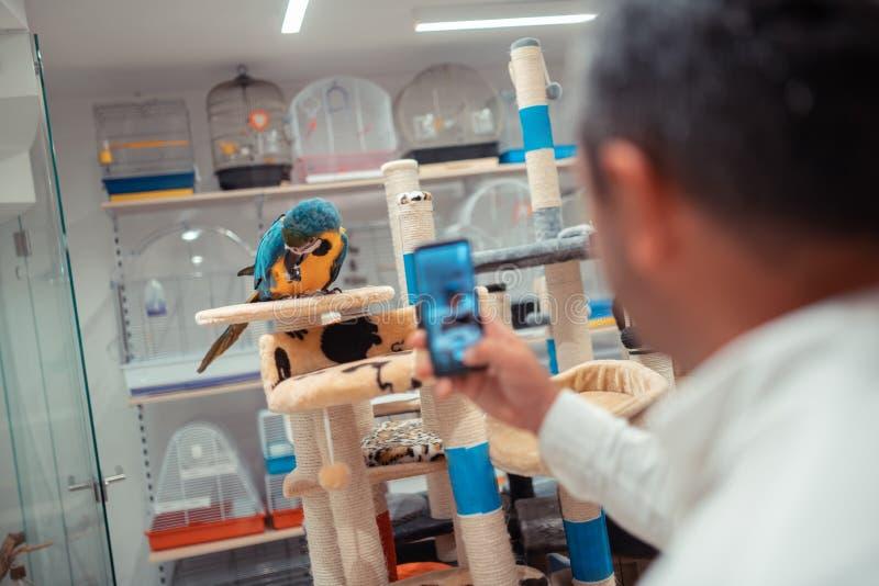 Feche acima do homem que usa o smartphone ao fazer a foto do papagaio foto de stock royalty free