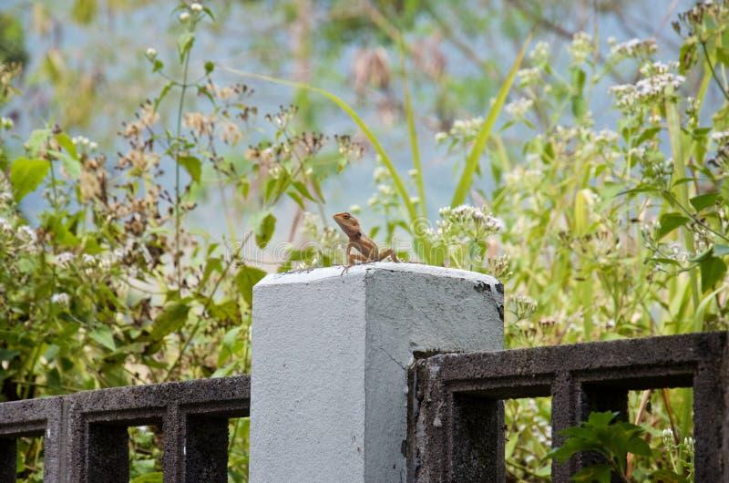 Feche acima do lagarto em um fundo das flores fotografia de stock