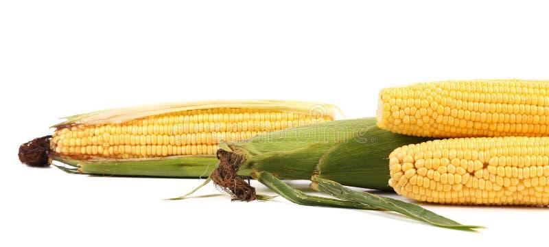 Feche acima do milho bonito fresco. imagens de stock