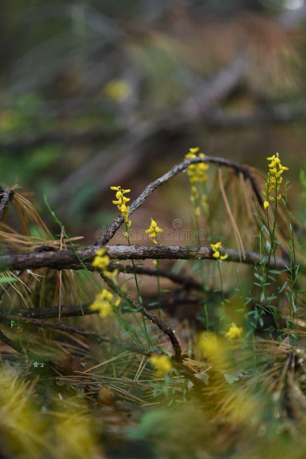 Feche acima do musgo verde Paisagem da natureza da ecologia Luz solar no macro escuro da floresta imagem de stock