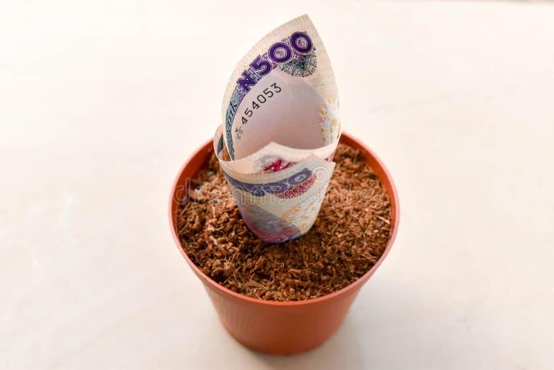 Feche acima do Nigerian cinco cem notas do naira no potenciômetro de flor do adubo fotos de stock