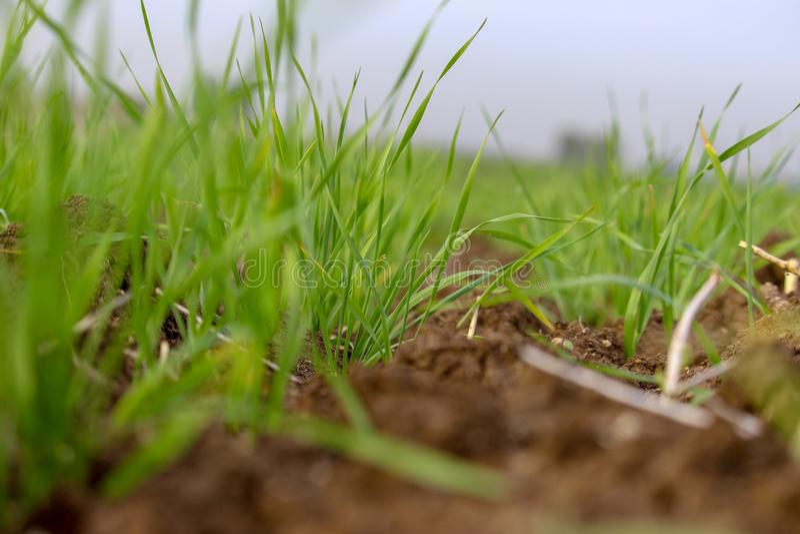 Feche acima do olhar em um campo de grama foto de stock