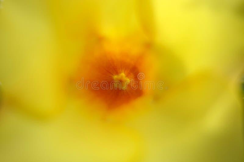 Feche acima do pólen da flor amarela imagem de stock royalty free