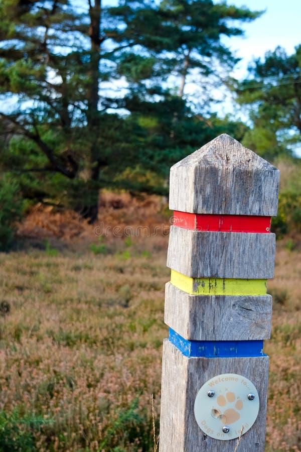 Feche acima do passeio assinam dentro a floresta imagens de stock