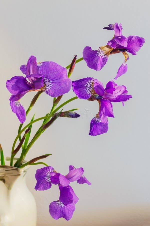 Feche acima do ramalhete roxo das flores das íris que mostra o detalhe a da pétala fotografia de stock