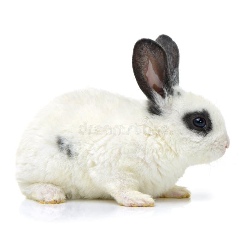 Feche acima do retrato do coelho bonito fotografia de stock