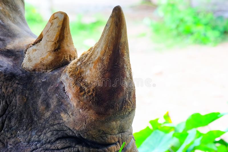 Feche acima do rinoceronte no jardim zoológico Tailândia fotos de stock