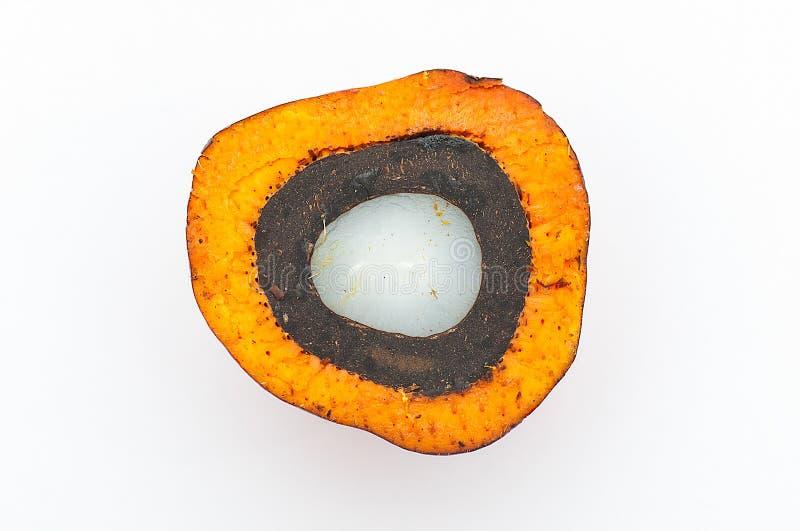 Feche acima do seção transversal de frutos de Dura do óleo de palma fotografia de stock