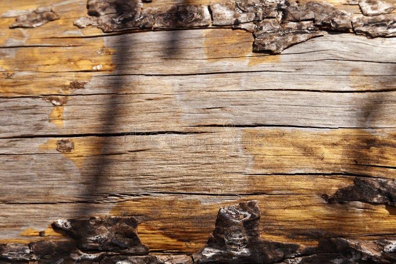Árvore, tronco de árvore, tronco, registro, foco seletivo, foco no foregrou fotos de stock royalty free