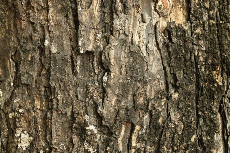 Feche acima do tronco de árvore na floresta, do fundo marrom escuro da madeira da casca com velho e da quebra imagem de stock royalty free