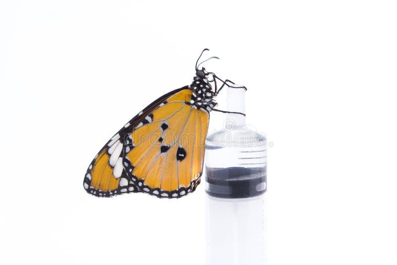 Feche acima do xarope de alimentação da borboleta de monarca fotografia de stock