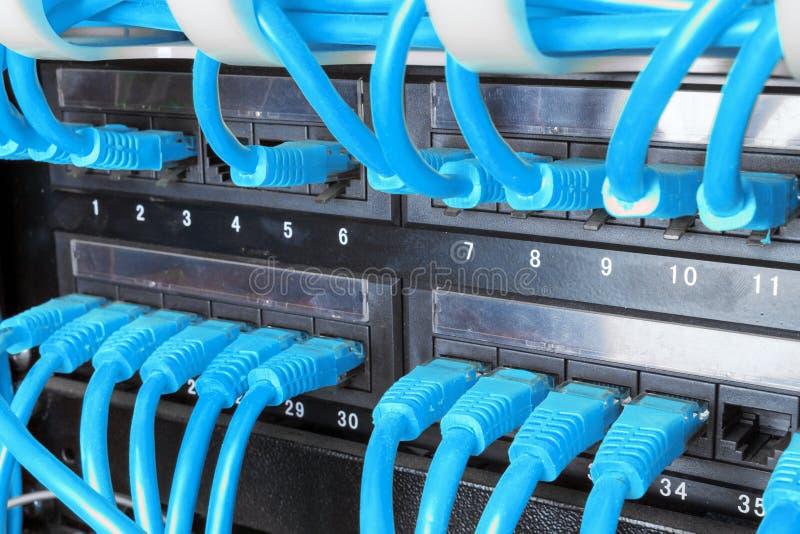 Feche acima dos cabos azuis da rede conectados ao painel de remendo imagem de stock royalty free