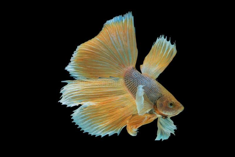 Feche acima dos melhores peixes imagem de stock