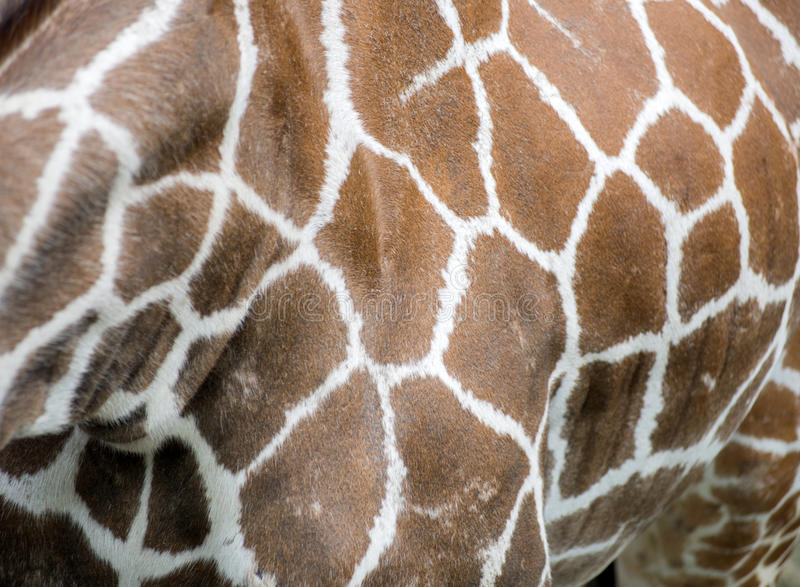 Feche acima dos pontos do girafa fotografia de stock royalty free