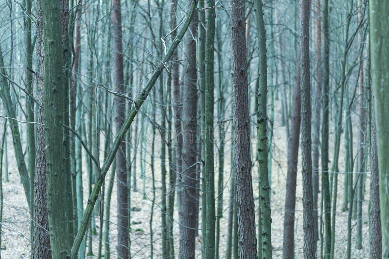 Download Feche Acima Dos Troncos De árvores Na Floresta Da Queda Foto de Stock - Imagem de bonito, wilderness: 80100736