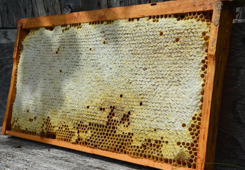 Feche acima no favo de mel cru com espaço da cópia para o texto Benefícios de comer e para comprar o favo de mel natural imagem de stock royalty free