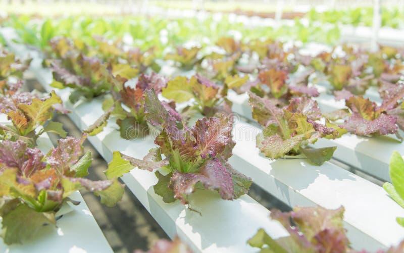 Feche acima no jardim vegetal durante o conceito do fundo do alimento do tempo de manhã com espaço da cópia imagens de stock