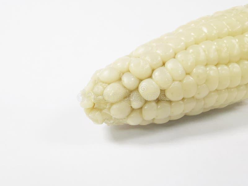 Feche acima o milho no fundo branco com espaço da cópia fotografia de stock royalty free