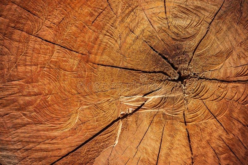 Feche acima a textura de cortar a madeira pela serra de cadeia imagens de stock