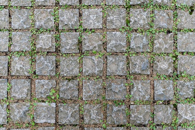Feche Fundo e textura do piso feito a partir de blocos de cimento e entre as juntas tem grama verde foto de stock