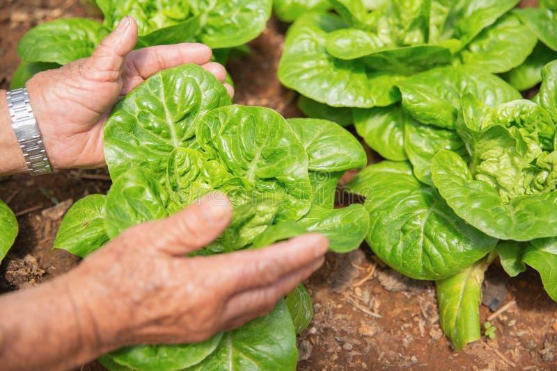Feche a m?o do fazendeiro no jardim durante o tempo de caf? da manh? imagem de stock