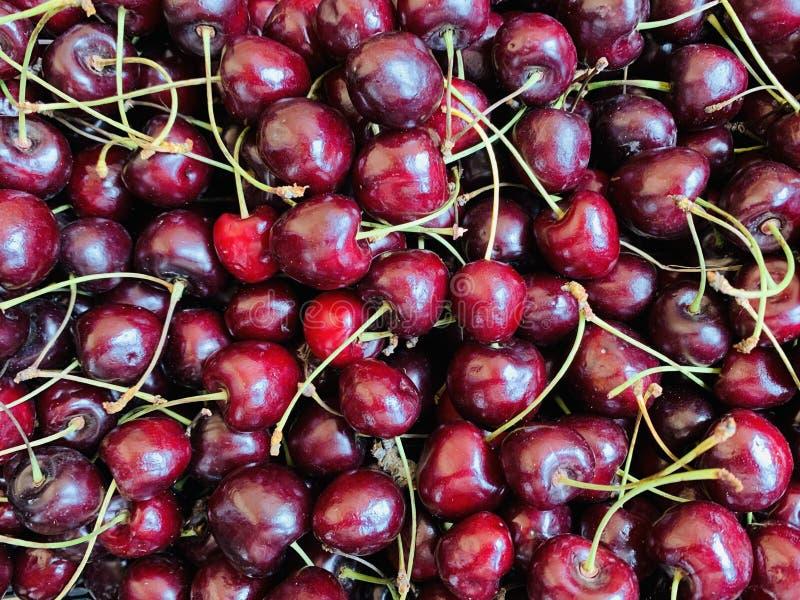 Feche a pilha de cerejas maduras com caules Grande colheita de cerejas vermelhas frescas Cerejas vermelhas orgânicas doces fotografia de stock royalty free