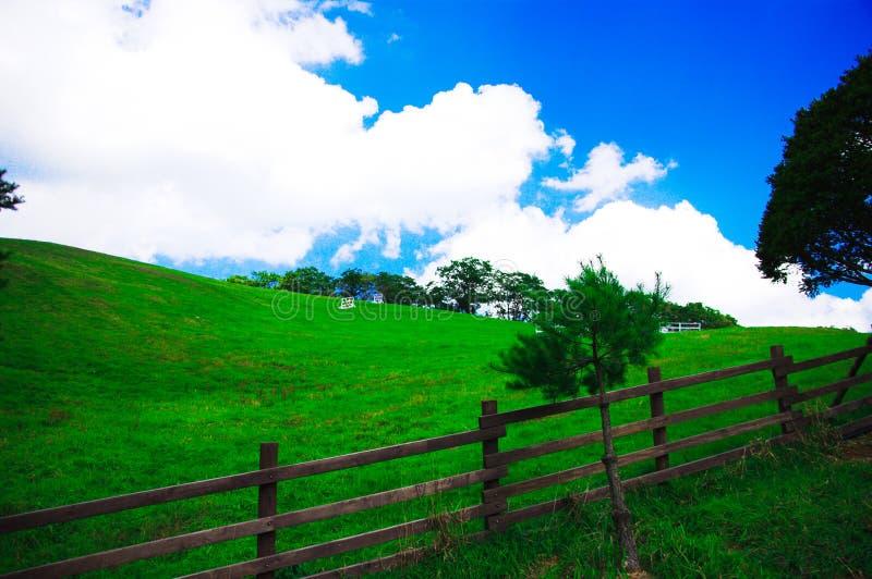 Fechtujący się gospodarstwo rolne w murawie w górę niebieskiego nieba i biel chmury zdjęcie royalty free