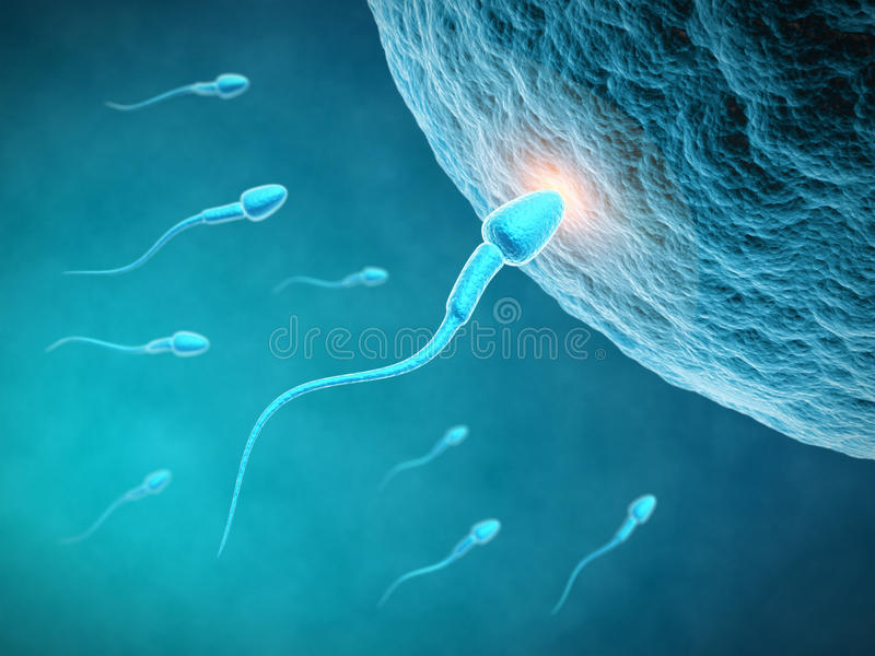 Fecundation. Egg and spermatozoon - 3d rendered illustration royalty free illustration