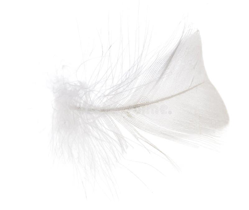 Feder auf einem weißen Hintergrund stockfotos