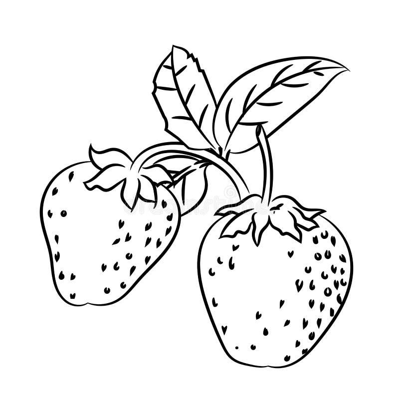 Federzeichnung der Erdbeere - einfache Linie Vektor stock abbildung