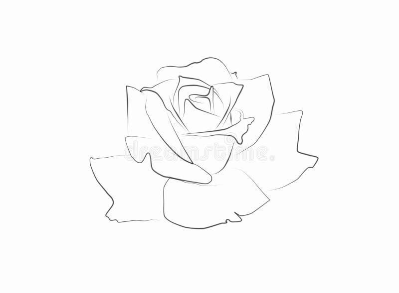 Federzeichnung einer Rose lizenzfreie abbildung