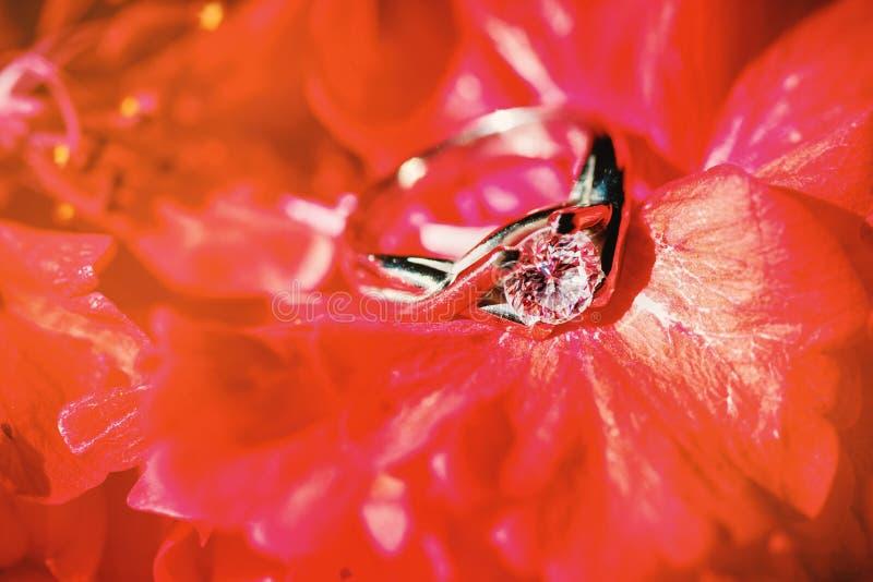 Fedi nuziali che circondano con il fiore rosso, fuoco del primo piano sulla testa del diamante fotografia stock libera da diritti