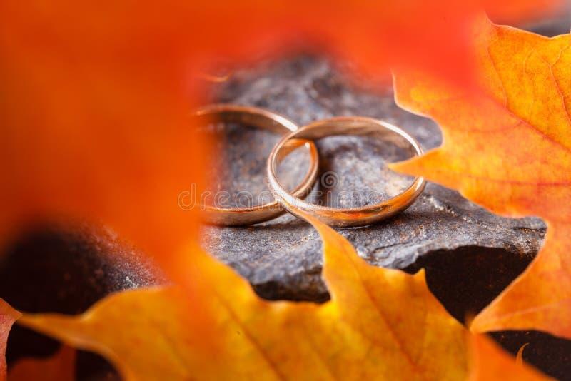 Fedi nuziali con le foglie di autunno dorate immagine stock