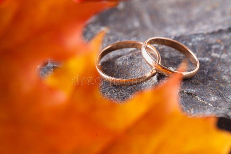 Fedi nuziali con le foglie di autunno dorate fotografie stock