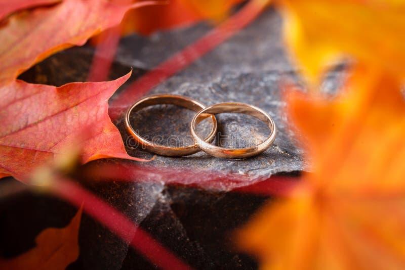 Fedi nuziali con le foglie di autunno dorate fotografie stock libere da diritti