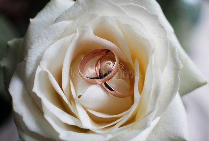Fedi nuziali dorate sul mazzo nuziale Gli anelli di cerimonia nuziale sul sono aumentato Insieme delle fedi nuziali in primo pian immagini stock libere da diritti