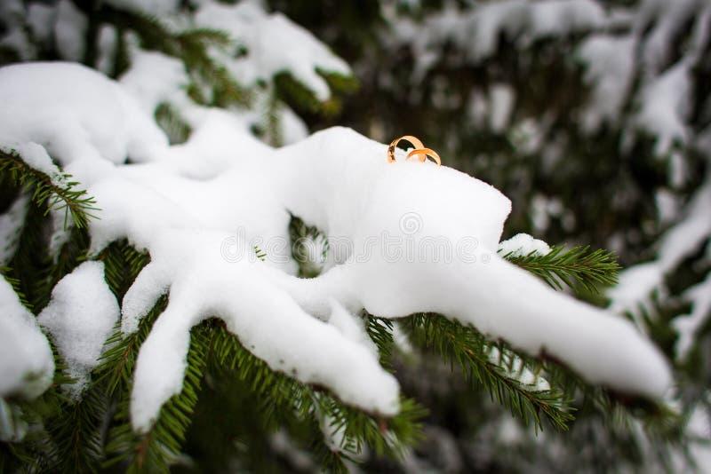 Fedi nuziali nella neve su un ramo dell'abete rosso Cerimonia nuziale di inverno immagini stock